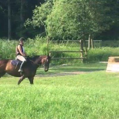 Pferdpferdp